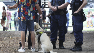 Police question a man after a sniffer dog identified him for suspected drug possession at Field Day music festival on January 1.