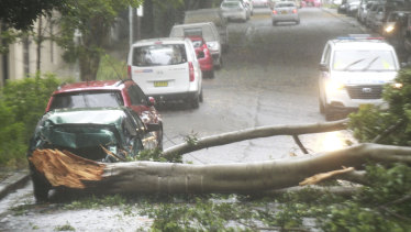Tree branches came down on a car, blocking Northwood Street, Camperdown.