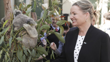 Environment Minister Sussan Ley warned last year that the status of koalas in various locations may be downgraded to endangered due to bushfires.