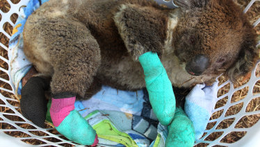 It's not just humans that have been devastated by the recent bushfires.