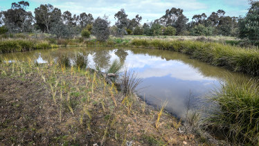 The site where ponds have been built to rejuvenate Bendigo Creek