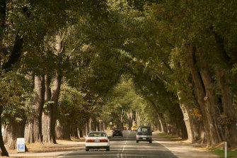 The Avenue of Honour in Bacchus Marsh.