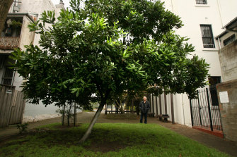 A frost-tolerant macadamia tree is perfect for the western suburbs. And you get nuts.