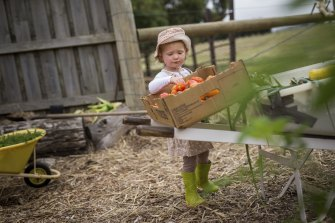 Quality control: Frida Ulph, 2, one of the youngest members of The Dairy vegetable garden.