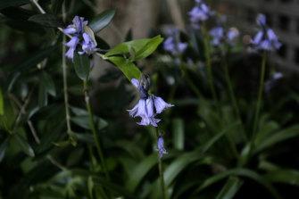 A vivid festival: Violets bring joy.