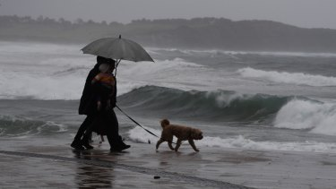 A wet walk on the beach at Dee Why on Wednesday.