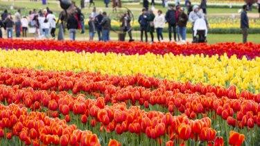 Tesselaar Tulip Festival.