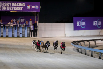 Greyhounds will still be able to race at Dapto after a supreme court ruling on Friday