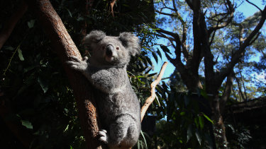The agreement has been labelled as a win for koalas and farmers alike.