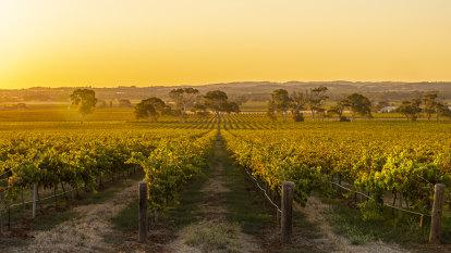 Australia's 52 top wineries: the 2021 list