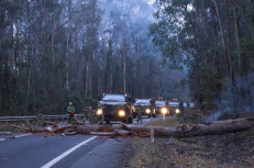 Crews have been working for weeks to clear sections of the Princes Highway. Pictured are Australian Defence Force troops and members of Forest Fire Management Victoria clearing felled trees on the Princes Highway just outside Genoa on January 12.