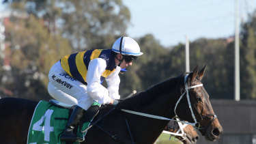 Old warrior: High Bridge is making a  charge at the  Cup.