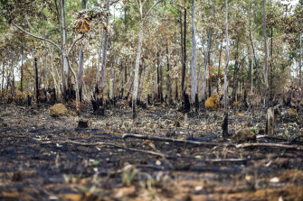 The aftermath of fires in the Veadeiros Plain national park in the state of Goias, Brazil.
