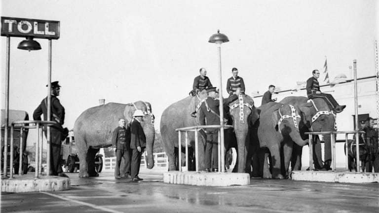 Elephants on the bridge to advertise Wirth's circus.