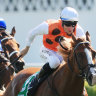 By George, All Aged win would make standout chestnut worth plenty