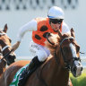 Ryan wants colder ride as Standout eyes Sydney Stakes consolation