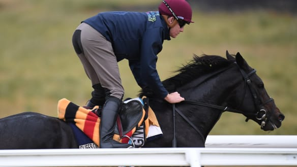 Instinct to help saw The Cliffsofmoher strapper by horse's side