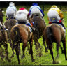 Melbourne Cup Carnival ticket sales to go to horse welfare
