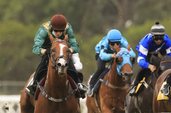 Mount Fuji, pictured winning a barrier trial at Rosehill on January 15, is the top selection in race 2.
