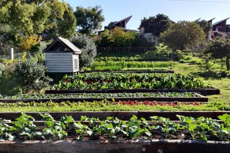 CERES in Melbourne's East Brunswick: During lockdown, people looked towards local producers and growing their own food to alleviate their fears of food insecurity.
