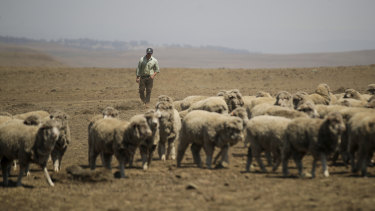The Morrison government will commit more funds to drought assistance.