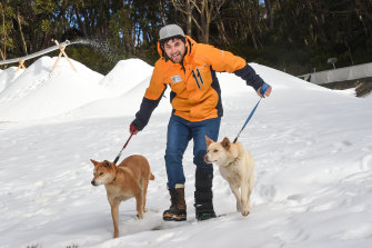 Mount Baw Baw worker Amon Bradshaw with dingoes that live on the resort.