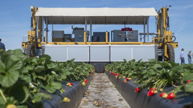 """Harv"", the Berry-4 automated strawberry harvesting robot, at the demonstration in Florida earlier this month."