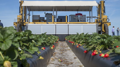 Harv the robot vs pickers in fight for the future of soft fruit farms