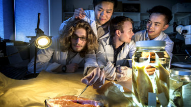 Students Michael Sacks, William Zhan, Michael O'Dea and Patrick Wan tested the fish.