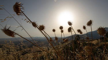 Dry vegetation in Petralia Soprana in Sicily, Italy, on Friday, when the island smashed the Continent's heat record.