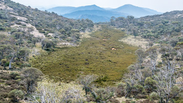 An alpine sphagnum bog at the source of the Cotter River in the Namadgi National Park, a fragile source of  Canberra's water supply.