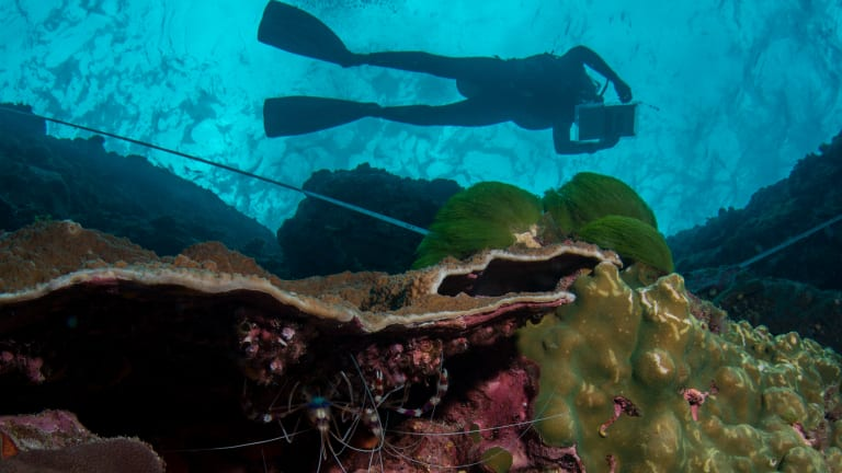 The Great Barrier Reef Foundation has been under close scrutiny after it received almost half a billion dollars of federal funding without a tender.