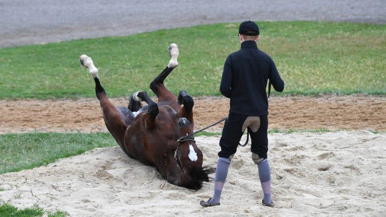 Rostropovich at Werribee Racecourse earlier in the week.