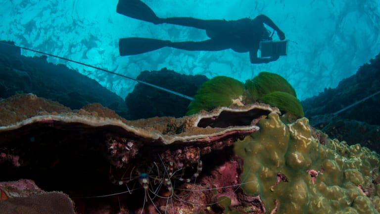 Fish stocks are in decline, according to data collected around Australia including by the Reef Life Survey.