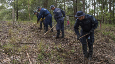 Police forming a search line during a forensic search in  bushland near Kendall.