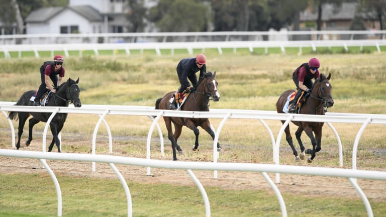Irish horses Spirit Of Valor, Fleet Review and Intelligence Cross train at Werribee last week.