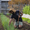 The new wave of urban farms sprouting strong community connections