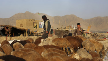 A shepherd boy tends his sheep in Kabul, Afghanistan.
