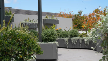Ronene Cauchi and Ean Rodrigues' wall and floor planters from ABC'S Dream Gardens.