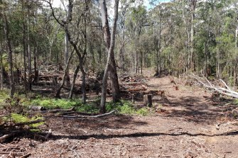 An area of the Styx River State Forest that could soon be cleared.