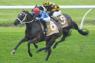 Golden Eagle favourite Funstar wins the Phar Lap Stakes at Rosehill in March.