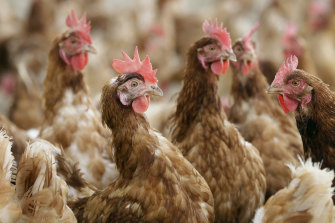 Poultry farms in the US had to destroy 3up to a third of their flocks because of a bird flu outbreak in late 2015.