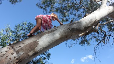 Anya Saeedi, 5, climbs a tree in Fadden. Anya's mother Carly Saeedi is the founder of start-up business From: Aunt Matilda.