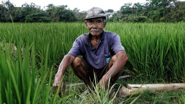 Wayan Roja shares the profit after each harvest of his 5000-square-metre field: one third for the landowner, two thirds for 74-year-old Wayan.