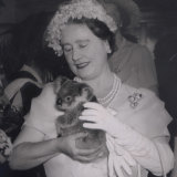 The Queen Mother with one of the koalas from the lone pine koala sanctuary 60 years ago on October 29, 1958.