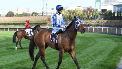 Allen comes full circle with Melbourne Cup ride Santiago