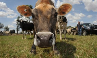Dairy industry groups have joined forces to produce a national plan to address the challenges facing the industry.