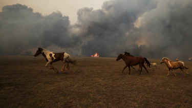 Fire approaches a horse paddock at Orangeville, north of Picton in NSW, earlier this month.