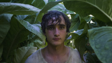 Abstract and ambiguous: Lazzaro.