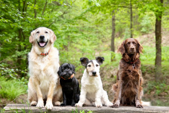 Dogs are calmer, friendlier and less likely to strike out in fear or panic – and it's reflected in their body language and the way they react to other dogs.
